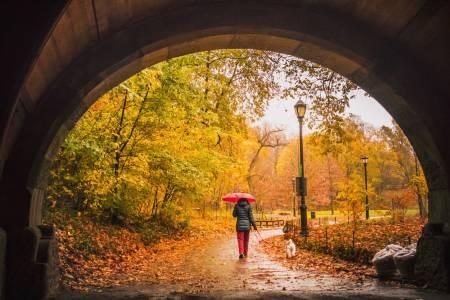 Autumn in Brooklyn