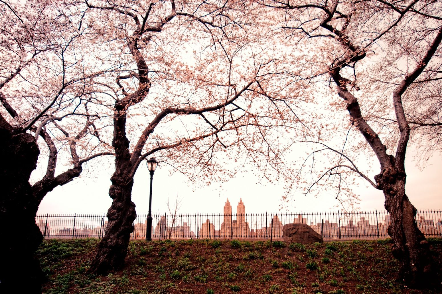 Central Park Spring Skyline