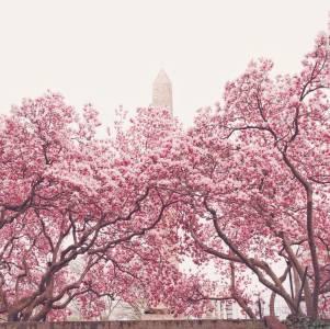 Spring - Central Park