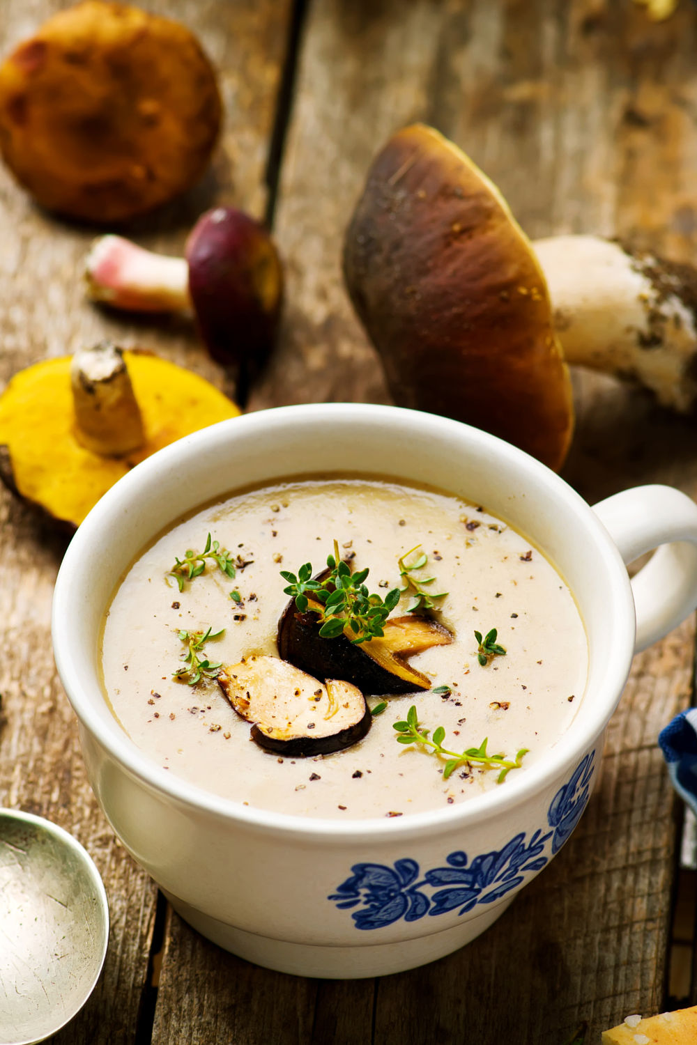 Forest mushrooms cream soup
